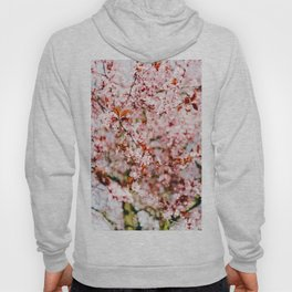 Cherry Blossom Tree (Color) Hoody