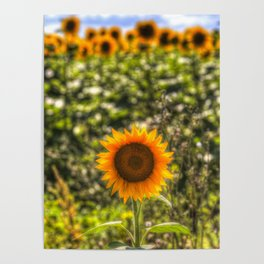 The Lonesome Sunflower Poster