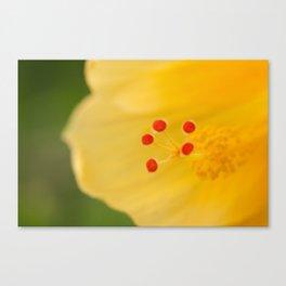 Yellow Hibiscus Heart-2 468 Canvas Print