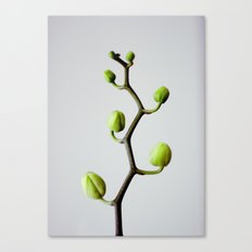 :: tree of growth :: Canvas Print