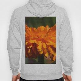 Aroma orange flower Hoody