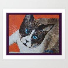 Rastus the Snowshoe cat Art Print