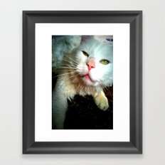 crazy kitty Framed Art Print