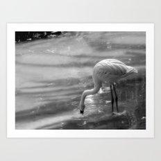Flamingo, Fuerteventura. Art Print