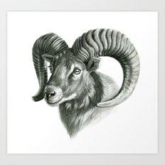The mouflon G125 Art Print