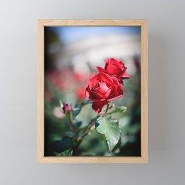 Red Roses Framed Mini Art Print