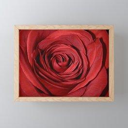 Red Rose Framed Mini Art Print