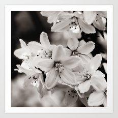 Little Whites ~ No.2 Art Print