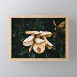 Southern Magnolia Flower Framed Mini Art Print