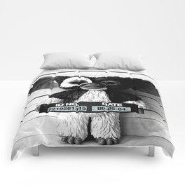 Gizmo lineup Comforters