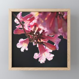 Floss Silk Blossom Framed Mini Art Print