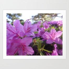 Flower Close Up Art Print