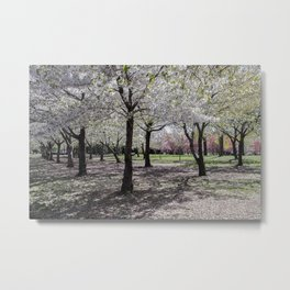 Spring at Flushing Park, Queens Metal Print