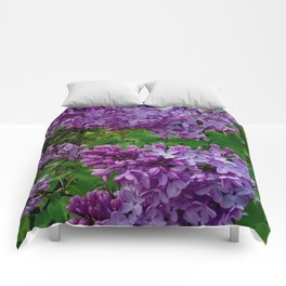 Lilacs in Bloom Comforters
