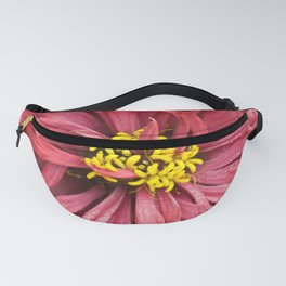 Close up of a pink chrysanthemum, with rain drops. Fanny Pack