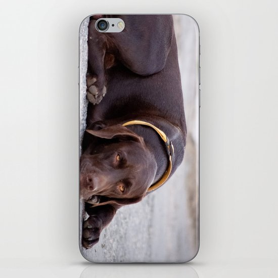 the hound dog iPhone & iPod Skin