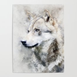 Watercolour grey wolf portrait Poster