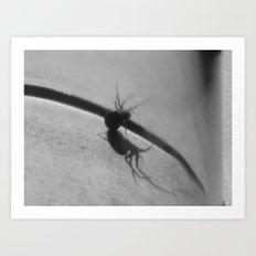 Spider under glass III Art Print
