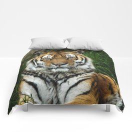 Majestic Fixed Tiger Stare Comforters