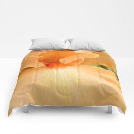 Bearded Iris Orange Harvest Comforters