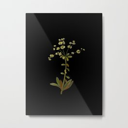 Euphorbia Amygdoloides Mary Delany Delicate Paper Flower Collage Black Background Floral Botanical Metal Print
