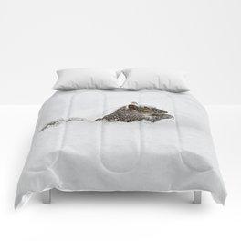 The groundhog said what Comforters