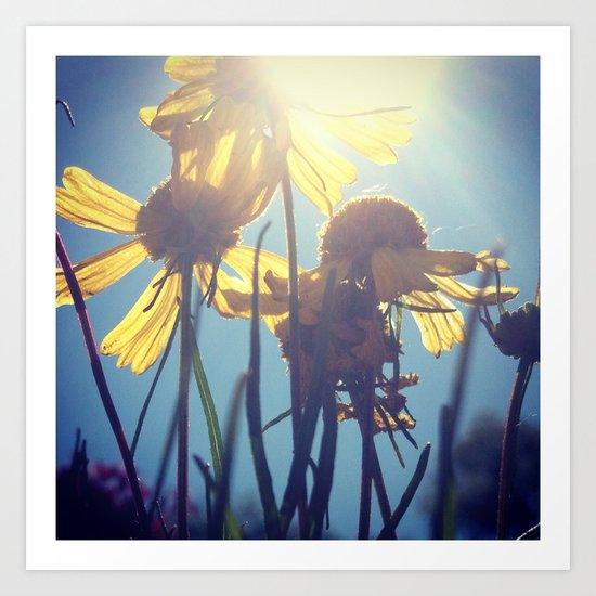 Flowers in Sunshine Art Print