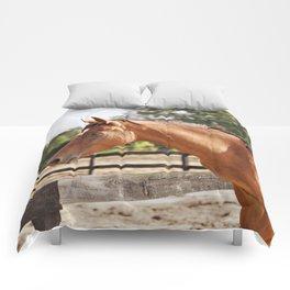 Sun Shining Comforters