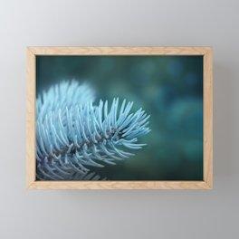 Blue spruce 2 Framed Mini Art Print