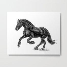 Black and White Friesian Horse Metal Print