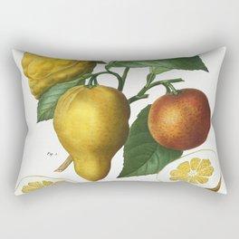 Bitter orange Citrus bigaradia bizarro from Traite des Arbres et Arbustes que lon cultive en France Rectangular Pillow