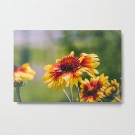 Summer's Haze. Flower Photograph Metal Print