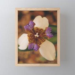 Walking Iris Framed Mini Art Print