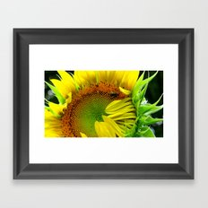 Sunflower Morning Framed Art Print
