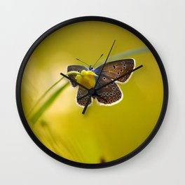 Lovely evening Wall Clock