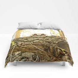 I see you Comforters