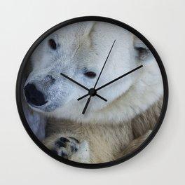 Funny Sleepy Polar bear close-up. Wall Clock
