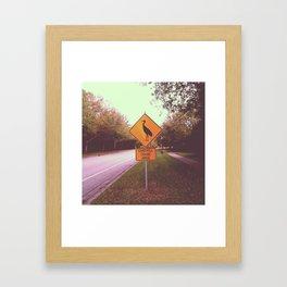 Sandhill Crane Area Framed Art Print