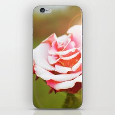autumn rose iPhone & iPod Skin