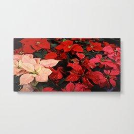 Crimson Red Poinsettia Christmas Holiday Flowers Metal Print