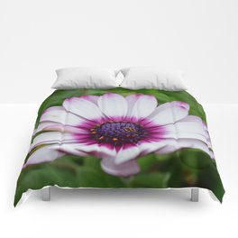 Pretty Purple Tips Comforters