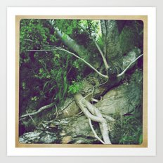 Natures Roots Art Print