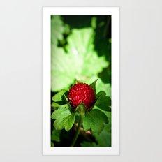 Wild Berry Art Print