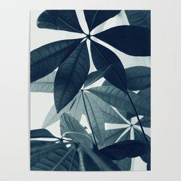 Pachira Aquatica #4 #foliage #decor #art #society6 Poster