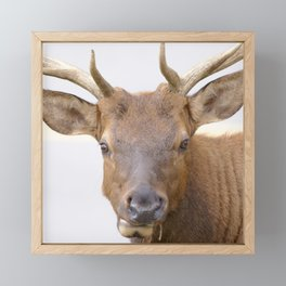Watercolor Elk Bull 4 Framed Mini Art Print