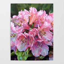 Courtenay Lady Rhododendron Poster