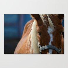 Renaissance Pony - Sorrel Blue Canvas Print