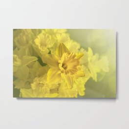 Narcissus Heaven  Metal Print