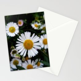 Daisy 8- Marguerite oxeye Stationery Cards