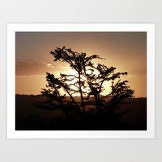 Sunset through acacia tree Art Print